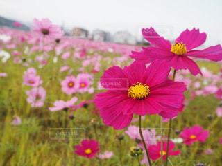 花畑 - No.441131