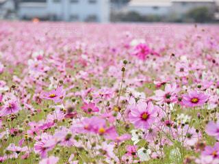 花畑の写真・画像素材[441134]