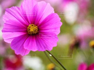 花畑の写真・画像素材[441135]