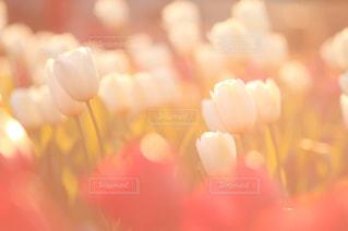 花の写真・画像素材[441536]