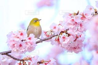 花の写真・画像素材[441537]
