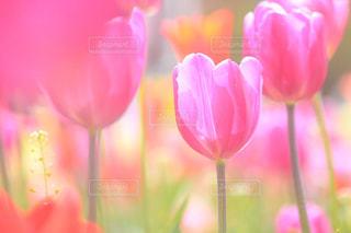 花の写真・画像素材[441540]