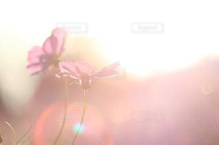 花の写真・画像素材[441555]