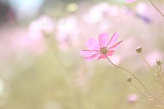 花の写真・画像素材[441556]