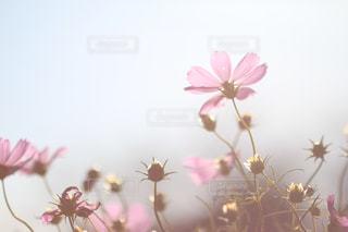 花の写真・画像素材[441557]