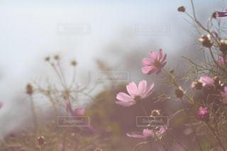 花の写真・画像素材[441558]