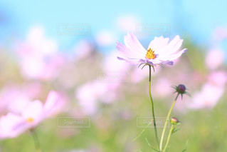 花の写真・画像素材[441559]