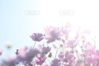 花の写真・画像素材[441561]