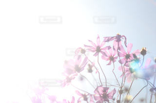 花の写真・画像素材[441562]