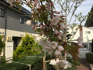 春の写真・画像素材[441758]