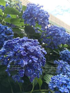 花の写真・画像素材[441745]