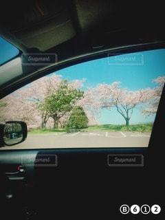 桜の写真・画像素材[15597]