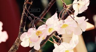 花の写真・画像素材[465006]
