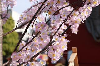 花の写真・画像素材[465007]
