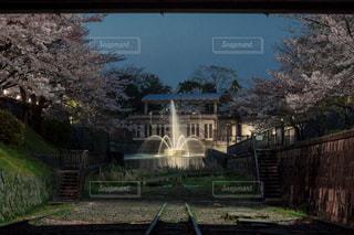 桜の写真・画像素材[442005]