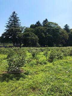 背景の木と大規模なグリーン フィールドの写真・画像素材[1530338]