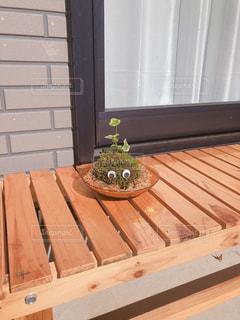 木製のベンチの上に座っている猫の写真・画像素材[1549160]