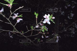 春 - No.442132