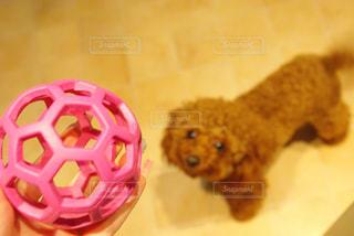 犬 - No.444167