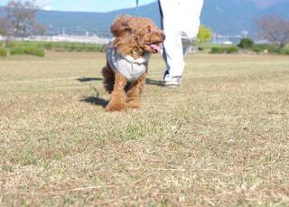 草の上に座って犬対象フィールド - No.989517