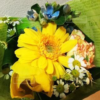 花の写真・画像素材[10717]