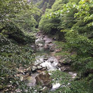 森を流れる川の写真・画像素材[742782]