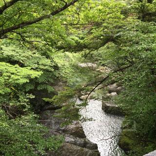 山の中の川景色の写真・画像素材[742784]
