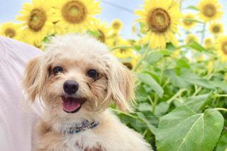 犬の写真・画像素材[675647]
