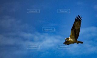 鳥の写真・画像素材[533275]