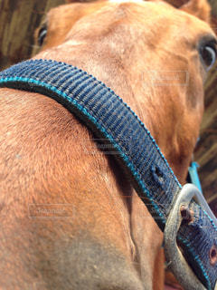 馬の写真・画像素材[442851]