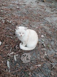 猫の写真・画像素材[442936]