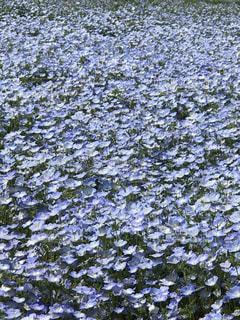 No.542067 青い花