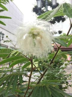 花の写真・画像素材[609657]