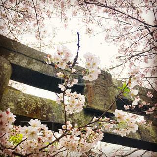 花の写真・画像素材[443519]