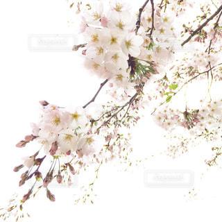 自然の写真・画像素材[443521]