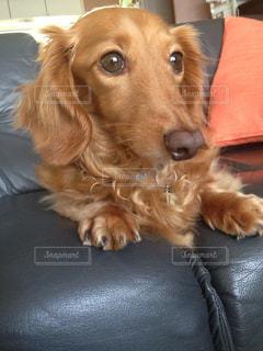 犬の写真・画像素材[443744]