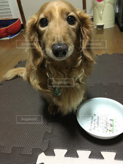 タレ目犬の写真・画像素材[1412161]