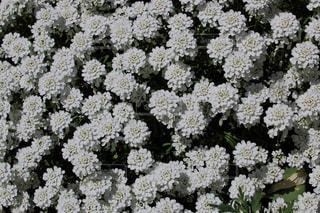 花の写真・画像素材[453764]