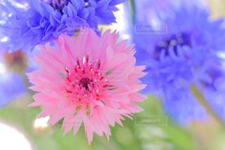 花の写真・画像素材[453767]