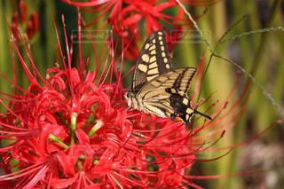 花の写真・画像素材[453789]