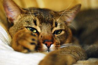 近くにベッドの上で横になっている猫のアップ - No.719267