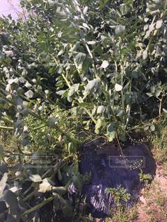 No.444234 野菜