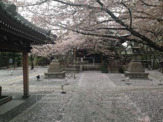 春の写真・画像素材[445183]