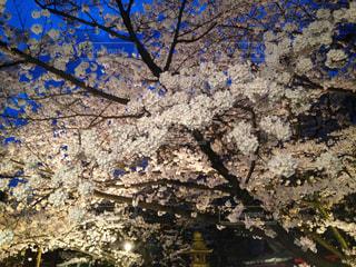 春の写真・画像素材[445184]