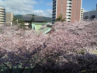 春の写真・画像素材[445185]