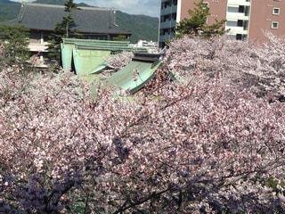 春の写真・画像素材[445186]