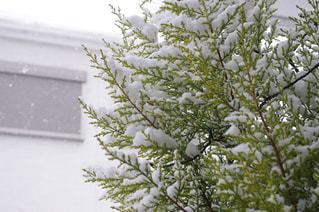 冬の写真・画像素材[445632]