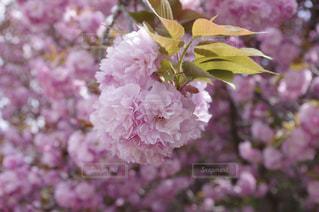 春の写真・画像素材[445637]