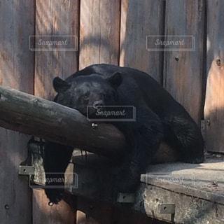 動物 - No.446434