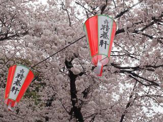 春の写真・画像素材[447382]